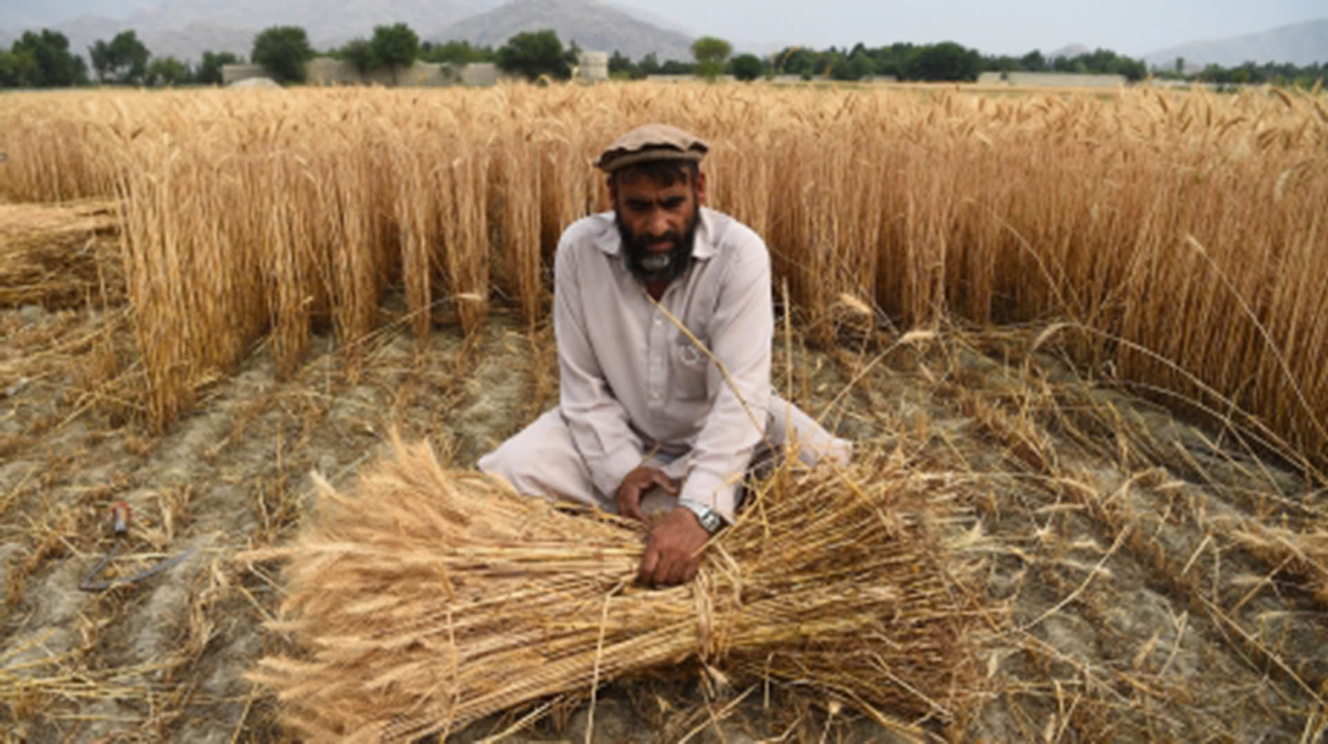 Food insecurity affects every one in four Afghan individuals following 40 years of conflict. Photo: Farshad Usyan/Supplied