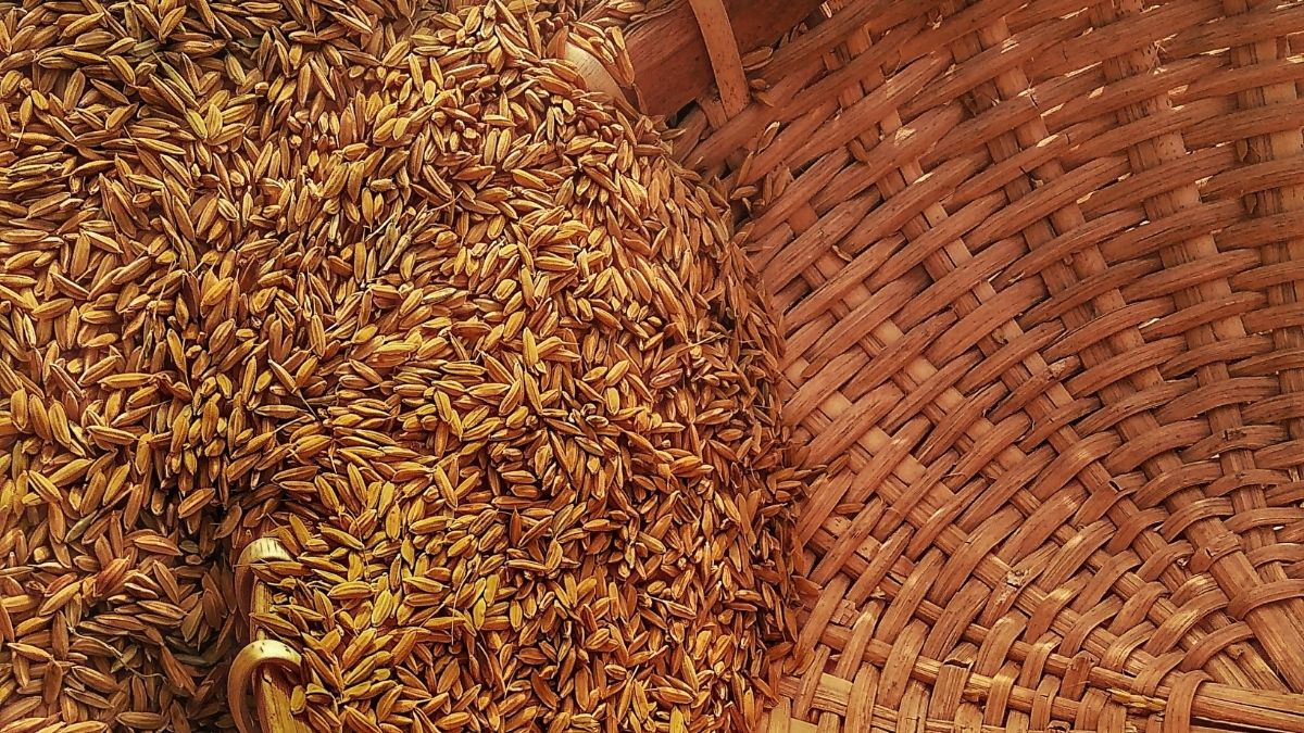 The widespread anarchy in KwaZulu-Natal and Gauteng is threating fuel. This, in turn, might be a severe blow for grain farmers. Photo: Supplied/Food For Mzansi