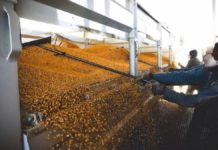 Through its proud involvement with organisations such as Agbiz, Agbiz Grain and the Grain Handling Organisation of South Africa, VKB plays a leading and participating role in the grain industry. Photo: Supplied/VKB