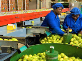 Fruit packing at the Bavaria fruit farm Hoedspruit. The fruit packagng facility packs Lemons, oranges and Mangoes predomiinatly for the export market. Photo: Supplied/Flickr