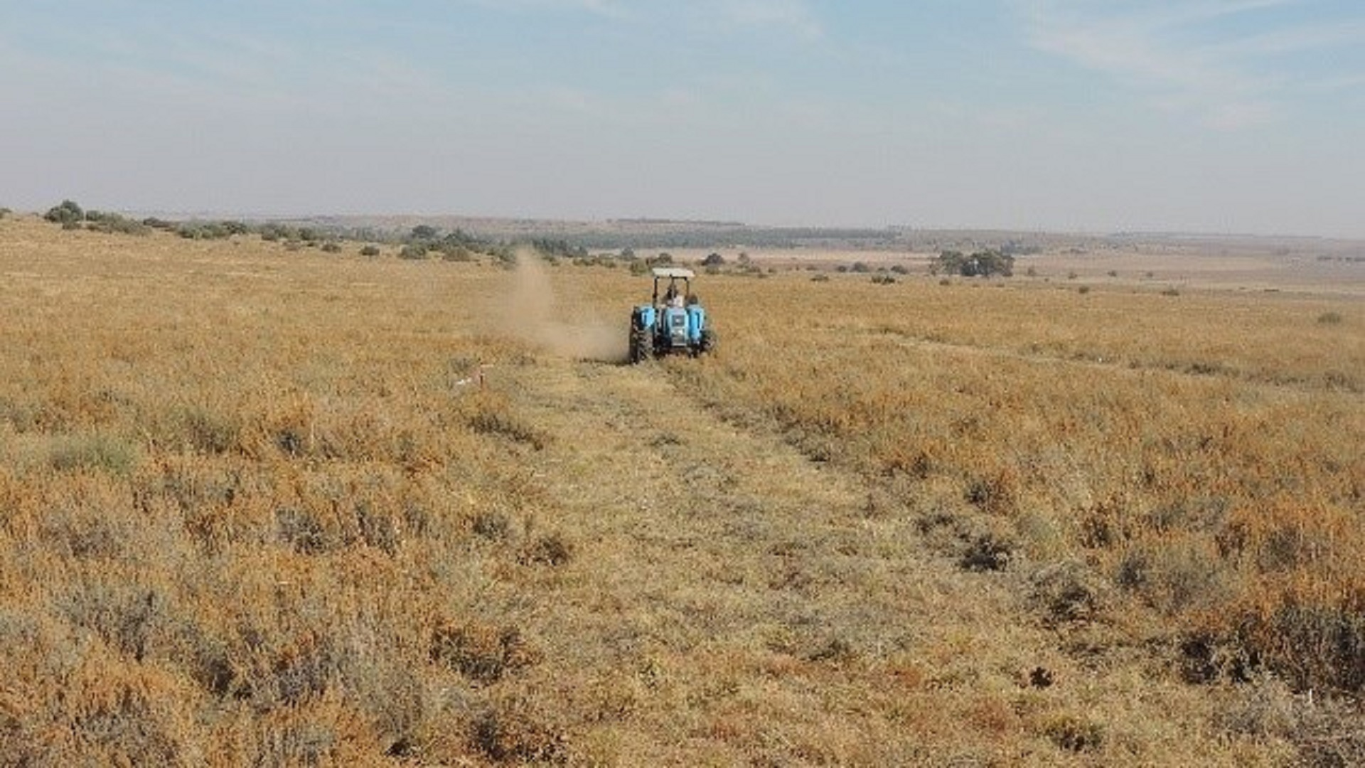 An experimental site under encroachment by bankrupt bush. Agricultural Research Council research shows that there may be nutritional value in some of the plants that invade rangelands that are not burnt regularly or overgrazed. Photo: Supplied/Food For Mzansi
