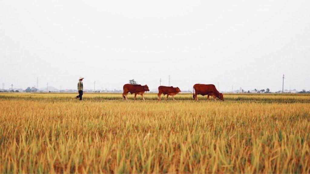 diversify your farming methods