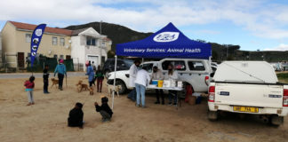 Rabies vaccination: Klapmuts is one of the towns the Western Cape department of agriculture has targeted for its rabies campaign. Photo: Supplied/Food For Mzansi