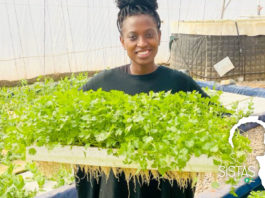 Mathibe is holding a tray of plants grown through hydroponics.