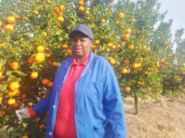 Noluthando Mbilase is the proud owner of a citrus farm in the Eastern Cape, and faced many challenges to get where she currently is. Photo: Supplied/Food For Mzansi