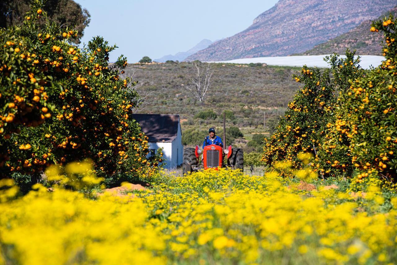 Willem Brand on Elandsfontein farm during citrus harvesting season. Photo: Armand Burger