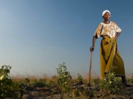 The United Nations Food and Agricultural Organisation (FAO) estimates that women comprise 43% of the agricultural labour force. Photo: Supplied/Food For Mzansi