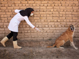 World Rabies Day is a global day of action and awareness dedicated to rabies prevention. Photo: Supplied/Flickr