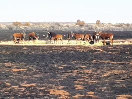 Farmers in the Free State suffered huge losses recently with more than 340 000 hectares of agricultural land having been engulfed. Photo: Supplied/Food For Mzansi
