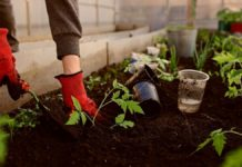 What you need to know about your soil
