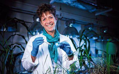 Resurrection plant researcher