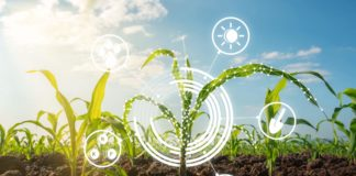 As South Africa's population continues to grow, ensuring food security into the future will depend on climate-smart and innovative farming methods. Photo: Supplied/Food For Mzansi