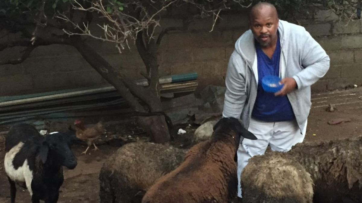 Sipho Shibe uses Voermol Molasses Meal to ensure that his animals are well-nourished and strong. Photo: Supplied/Food for Mzansi