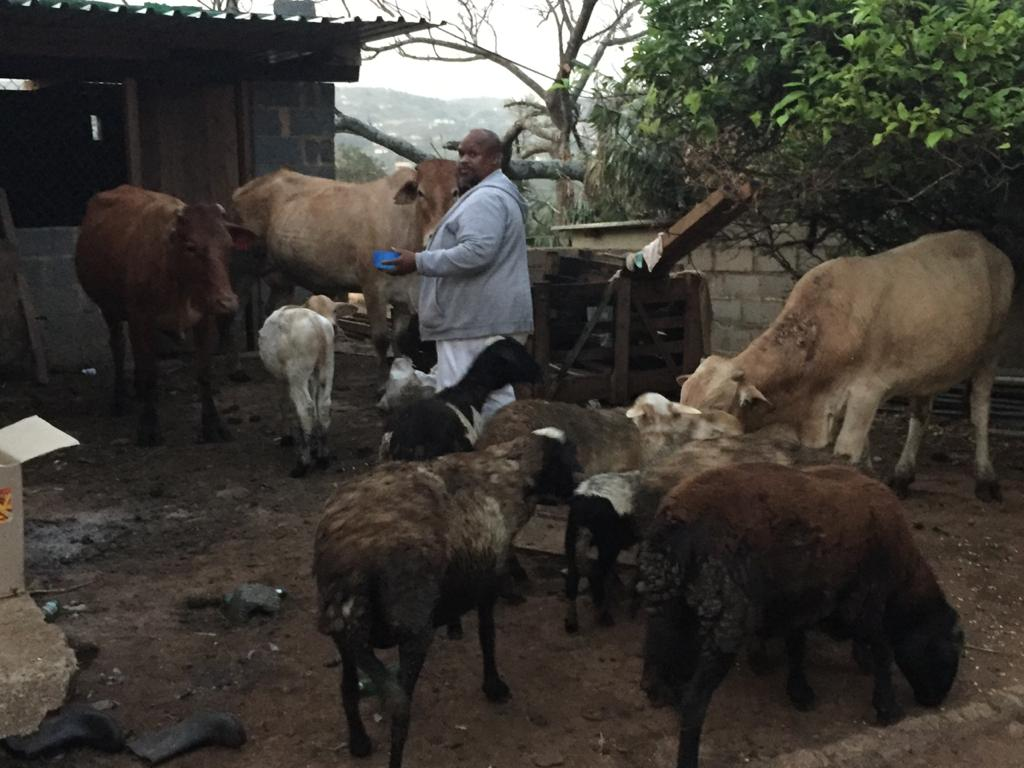 Shibe now farms with over a dozen animals. Photo: Supplied/Food for Mzansi
