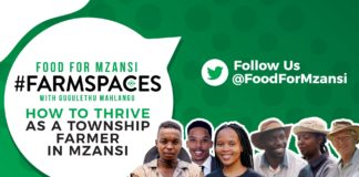 Agriculture in the spotlight: On this week's Food For Mzansi #FarmSpaces, we are talking township farming. Photo: Supplied/Food For Mzansi.