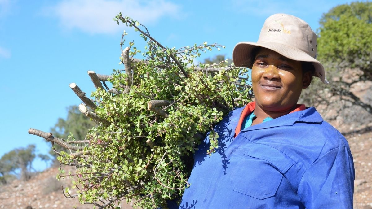 It is imperative not to forget the people behind the restoration process, fair treatment, and the capacity- building potential to restore livelihoods through the spekboom projects in the Eastern Cape. Photo: Supplied/Food For Mzansi
