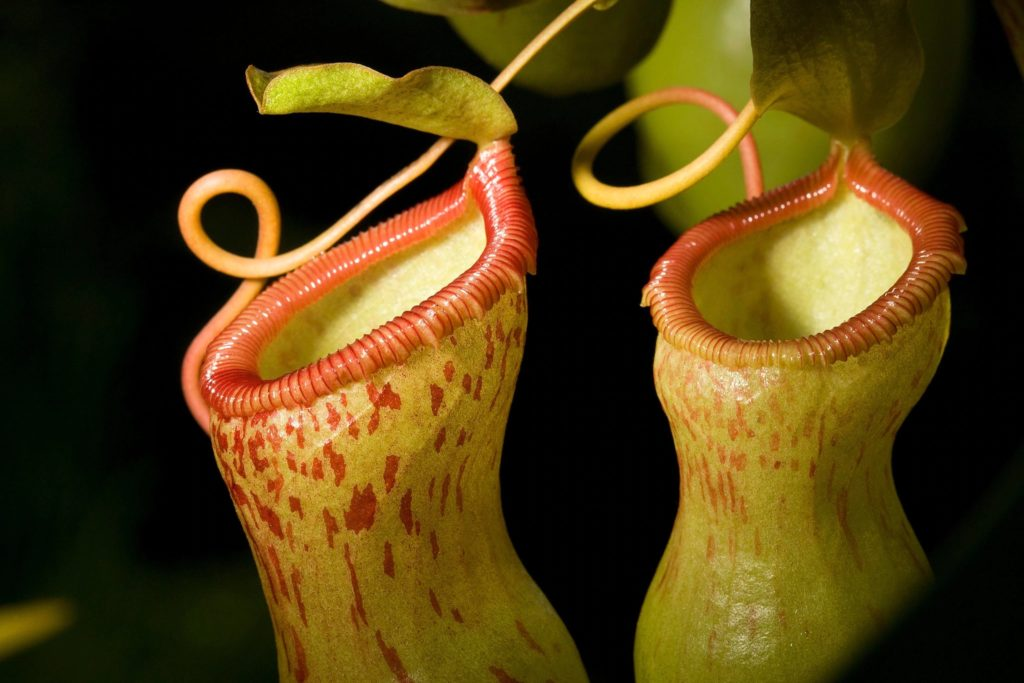 California Carnivores is a plant farm in Forestville, California that grows more than 500 varieties of carnivorous. Photo: Supplied/Food For Mzansi