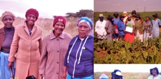 A group elderly women are growing veggies on dumping site to feed their community while encouraging youth to take interest in farming. Photo: Supplied/Food For Mzansi