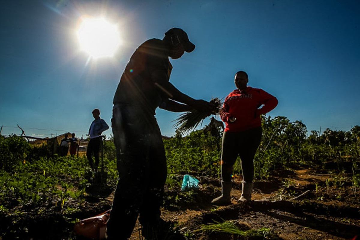 How Covid-19 has impacted black farmers in South Africa.