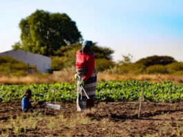 Agriculture must feature on the agendas coalition governments, agricultural role-players warn. Photo: Supplied/Food For Mzansi