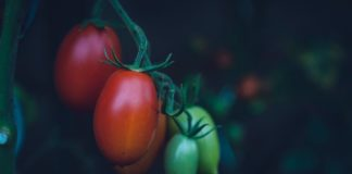 The African Plant Breeders Association (APBA) 2021 conference is taking place this Monday. Photo: Unsplash/Markus Spiske