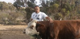 With Voermol, Chris Hess says he is able to keep his animals in good shape all year. Photo: Supplied/Food For Mzansi