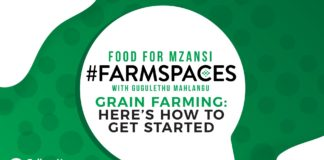 Join Food for Mzansi #FarmSpaces on Monday at 6pm, for advice from expert farmers and insight into taking your grain farming efforts to the next level. Photo: Supplied/Food for Mzansi.