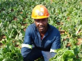 When Solomon Makgato first started farming six years ago, he was the first in his area not to only live off the food, but also sell his produce to local stores. Photo: Manare Matabola/Food For Mzansi